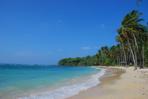 Foto Pantai Karimunjawa Pohon Kelapa